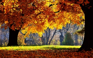 pictures_1920x1200_2012_Nature_Seasons_Autumn_Indian_summer_034865_